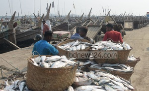Representational Image: Workers carrying baskets full of hilsas to warehouses from the Fishery Ghat in Chattogram on April 17, 2019. Photo: Sumon Babu
