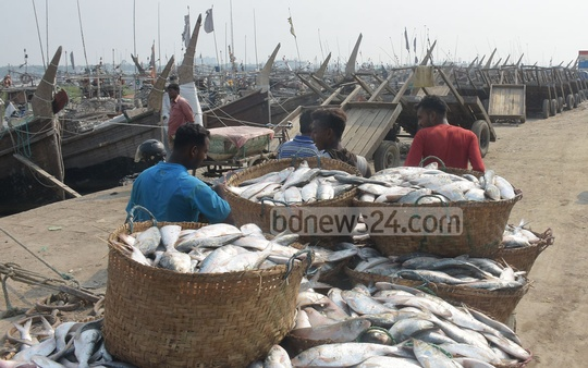 Workers carrying baskets full of hilsas to warehouses from the Fishery Ghat in Chattogram. Photo: Sumon Babu