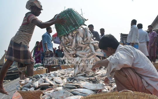 Workers unloading hilsas caught from the Bay of Bengal at the Fishery Ghat in Chattogram. Photo: Sumon Babu