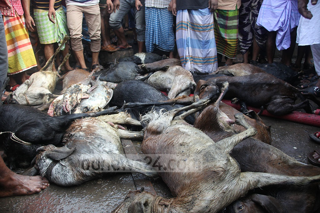 A number of goats were killed in a fire at the Malibagh Kitchen Market in Dhaka on Thursday.