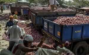 Workers load onions onto trucks at an onion market in Lasalgaon, near Nashik, India, Apr 8, 2019. The New York Times