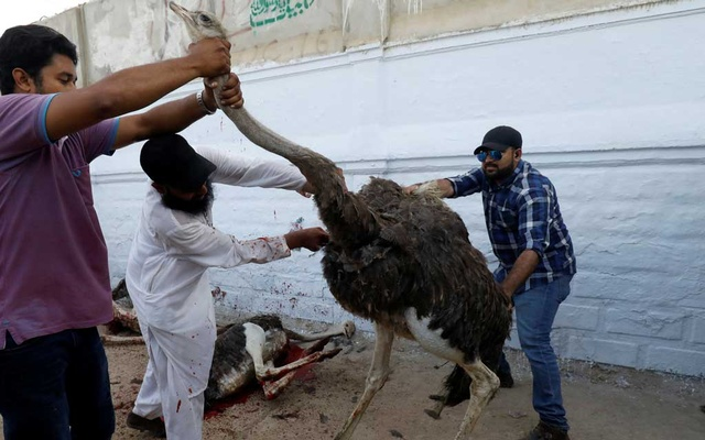 Volunteers control an ostrich as they slaughter them to prepare charity food, for the first day of the fasting month of Ramadan, in Karachi, Pakistan, May 6, 2019. Reuters