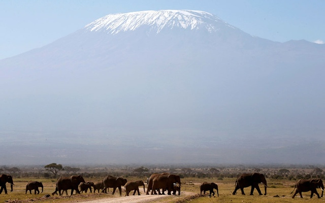 FILE PHOTO: Mount Kilimanjaro in the distance, as elephants walk in Amboseli National park January 26, 2015. Reuters