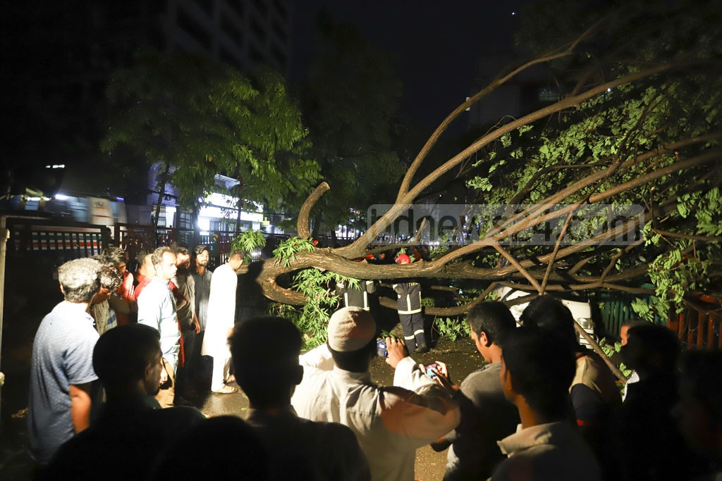 A tree uprooted on the street in front of the Government Titumir College in Dhaka's Mohakhali during a storm disrupting traffic on Friday evening. Photo: Asif Mahmud Ove