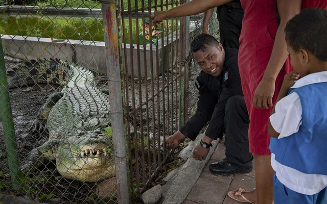 A police officer encourages a young boy to shake the foot of a captive crocodile in Dili, East Timor, Feb. 4, 2019. Crocodile attacks in East Timor have increased in recent years, and scientists are trying to figure out why. (Matthew Abbott/The New York Times)