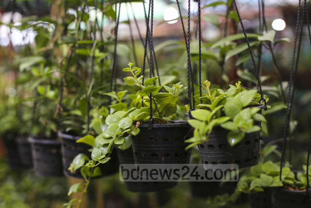Plants for indoor home decoration are available at a month-long tree fair in Dhaka's Agargaon. These beautiful plants are gaining popularity among the residents of the city as they need less light, air and water. Photo: Mahmud Zaman Ovi