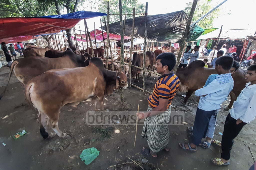 A view of a makeshift cattle market set up at Postogola Crematorium Pier in Dhaka on the bank of the Buriganga ahead of Eid-ul-Azha. Photo: Abdullah Al Momin