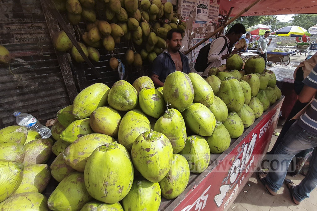 Doctors recommend drinking more liquid for dengue patients. Traders in Dhaka have raised green coconut prices from Tk 40-50 to Tk 80-90 each to make the most of the outbreak. This photo was taken in front of the Dhaka Medical College Hospital on Tuesday. Photo: Abdullah Al Momin