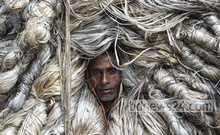 Workers taking newly harvested jute down from a boat at 'Ghior Haat' in Manikganj. Photo: Mostafigur Rahman