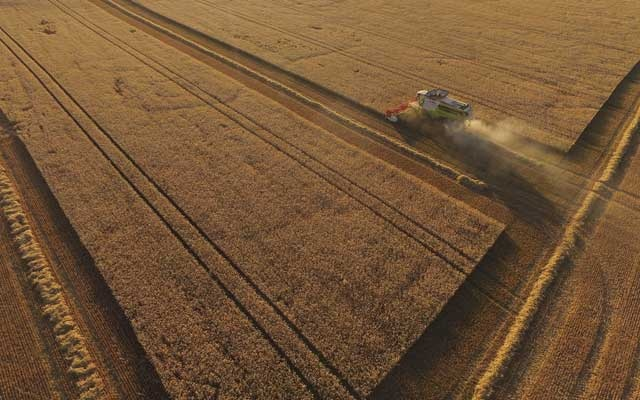 A combine harvesting triticale, a hybrid of wheat and rye, in Germany. The New York Times