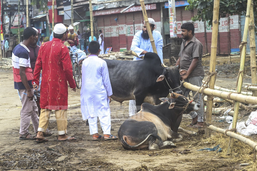 Cattle traders looking for buyers at the cattle market in the capital's Dholai Khal on Eid day. Photo: Abdullah Al Momin