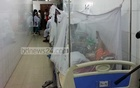 Number of dengue patients declines, but remains higher than in July
