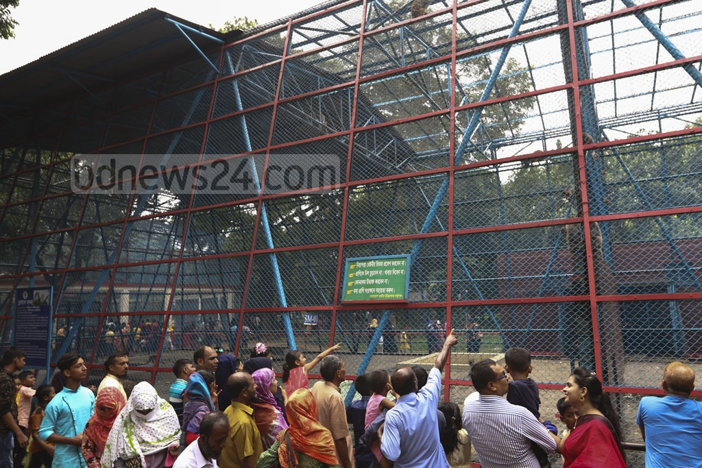 The monkey cage also was a big crowd-puller at the Dhaka zoo in Mirpur a day after the Eid-ul-Azha. Photo: Mahmud Zaman Ovi
