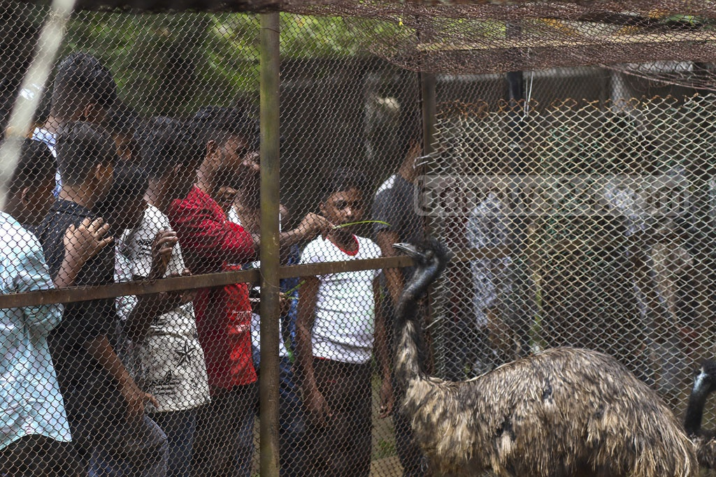 Visitors trying to feed ostriches violating the rules during their visit to Dhaka zoo in Mirpur on Tuesday, a day after the Eid-ul-Azha. Photo: Mahmud Zaman Ovi
