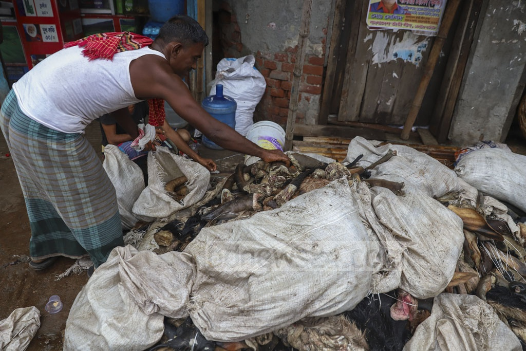 Workers preserving rawhides, bones and other parts of cattle slaughtered on the Eid-ul-Azha at Posta in Old Dhaka, a day after the festival. Photo: Abdullah Al Momin