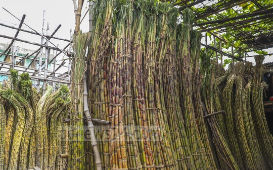 A pack of hundred sugarcanes is up for sale at Tk 600 to 700 at the Old Dhaka's Farashganj.