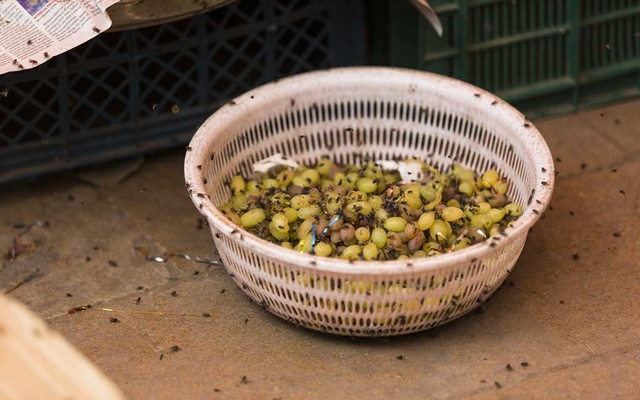 Flies on produce at a market in Karachi, Pakistan, Aug. 28, 2019. Pakistan's biggest city had heavy rains, bad drainage and a garbage problem — and now, bugs are everywhere. (Mustafa Hussain/The New York Times)