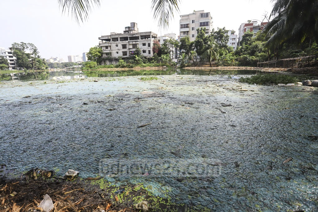 The colour of water in the Banani Lake of Dhaka has turned into blue due to pollution from waste materials dumped into the water-body. Photo: Asif Mahmud Ove