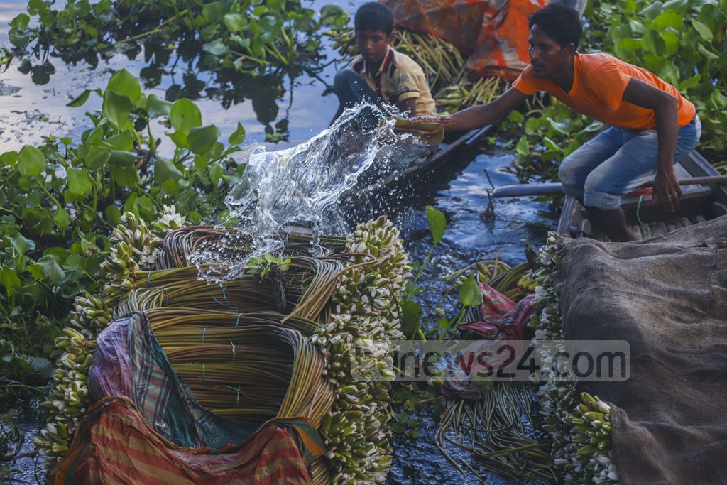 Wet cloth is used to cover water lilies collected from the Arial Beel to protect the flowers from drying. Photo: Abdullah Al Momin