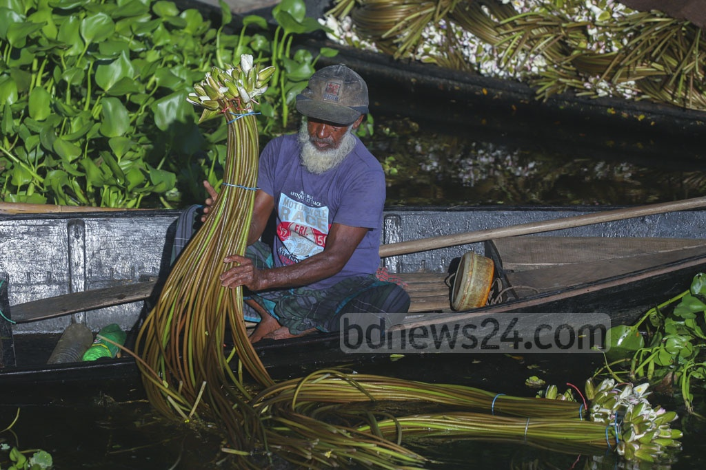 Water lilies collected from Arial Beel in Munshiganj are kept in bundles on a boat. Each bundle of 52 water lilies will be up for sale at Tk 15-20. Photo: Abdullah Al Momin