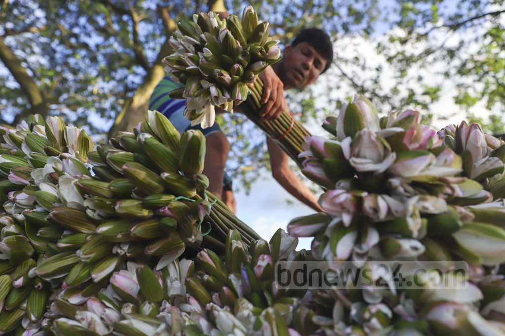 Workers load a pickup van with water lilies from a boat in Munshiganj's Arial Beel. These will be sold in different kitchen markets of Dhaka. Photo: Abdullah Al Momin