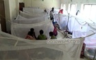 Daily rate of hospitalisation for dengue rises again