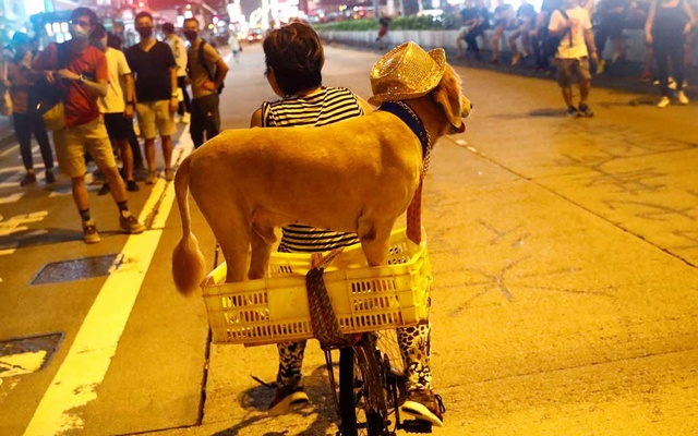 File Photo: A woman and her dog are seen at Mong Kok district in Hong Kong, China, Sep 8, 2019. REUTERS