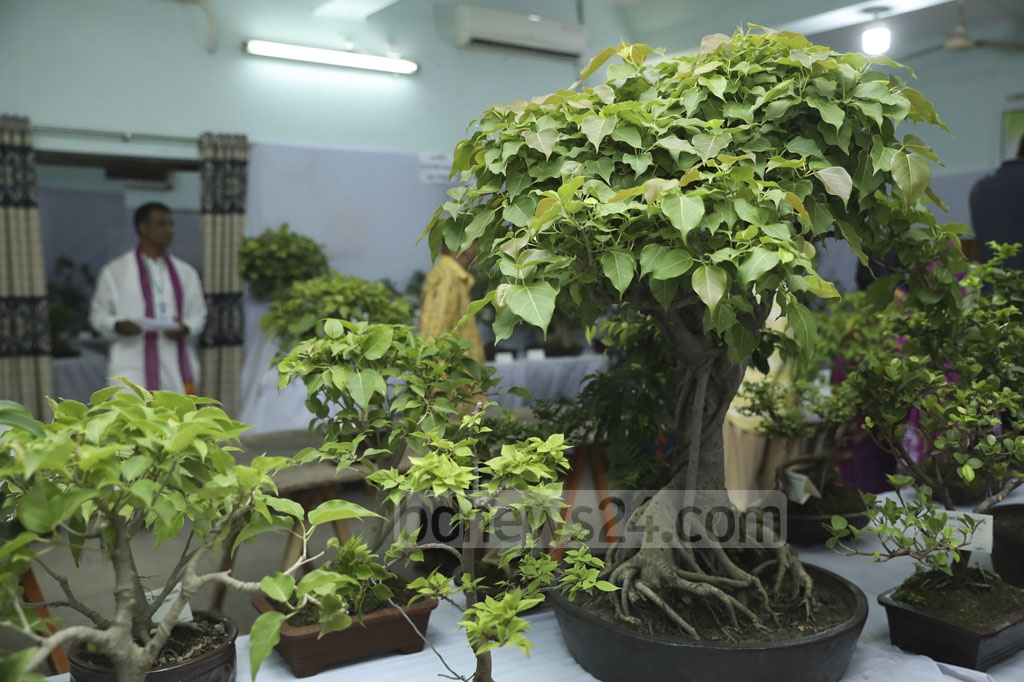 Radiant Bonsai Society has organised an exhibition of artificially dwarfed trees at WVA auditorium in Dhaka's Dhanmondi. The society's 11th Bonsai Exhibition will continue from Thursday to Sunday.