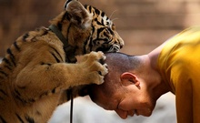 FILE PHOTO: A Buddhist monk plays with a tiger at the Wat Pa Luang Ta Bua, otherwise known as Tiger Temple, in Kanchanaburi province February 12, 2015. Reuters