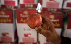 A worker displays a rotten apple at a warehouse, in Sopore, north Kashmir, September 13, 2019.