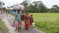 Members of a family returning to home from a shelter centre at the Khulna's Dacope Upazila after a cyclone on Sunday. Photo: Mostafigur Rahman