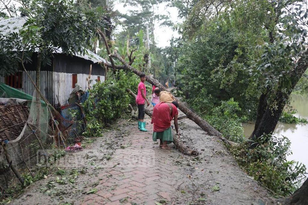 Trees uprooted at the Khulna's Dacope Upazila show the strength of cyclone Bulbul which hit Bangladesh in a weakened form after lashing the West Bengal coasts in India. Photo: Mostafigur Rahman