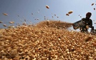 Bangladesh to import 100,000 tonnes of wheat from Russia