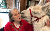 In an image provided by Jennifer Kingson, Jean Wyatt greets Tic at the Stockdale Residence and Rehabilitation Centre in Stockdale, Texas, in April. The charismatic llama is a welcome addition at some nursing homes and rehabilitation centers The New York Times