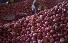 A worker sorts onions at a wholesale vegetable market in Chandigarh, India, Jul 24, 2015. REUTERS