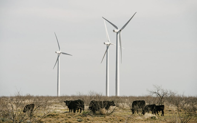 Cattle graze among wind turbines near Stanton, Texas on Feb 21, 2019. The New York Times