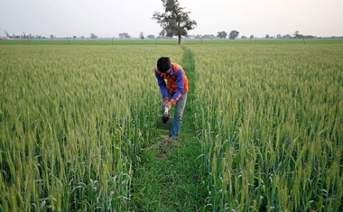 FILE PHOTO: A farmer works in a wheat field on the outskirts of Ahmedabad, India, Feb 1, 2018. REUTERS