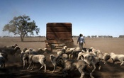 James Hamilton, who has planted no crops this year and plans to sell his livestock, at his farm in New South Wales, Australia, Oct 9, 2019. As a crippling drought and mismanagement have left more than a dozen Australian towns and villages without a reliable source of water, the country is beginning to confront a question that strikes at its very identity: Is life in Australia's vast interior compatible with the age of climate change? The New York Times