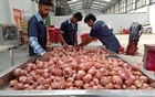 File Photo: Workers of a retail chain sort onions at Manchar village in Pune, India, November 11, 2019. Reuters
