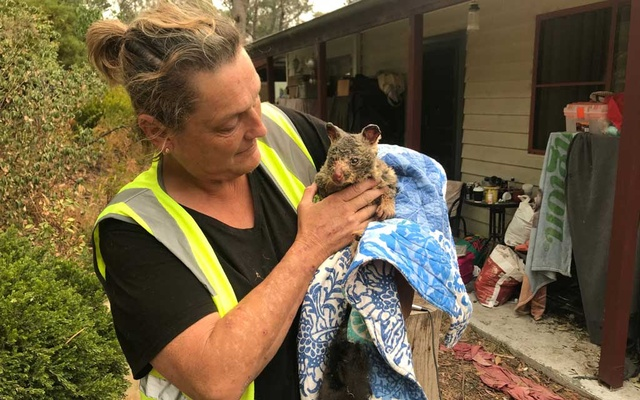 Wildlife Information, Rescue and Education Services (WIRES) volunteer and carer Tracy Burgess holds a severely burnt brushtail possum rescued from fires near Australia's Blue Mountains, Dec 29, 2019. REUTERS