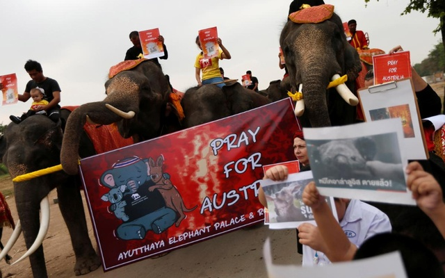Students and a troupe of ten elephants pray for Australia bushfires, in Ayutthaya, Thailand Jan 13, 2020. REUTERS