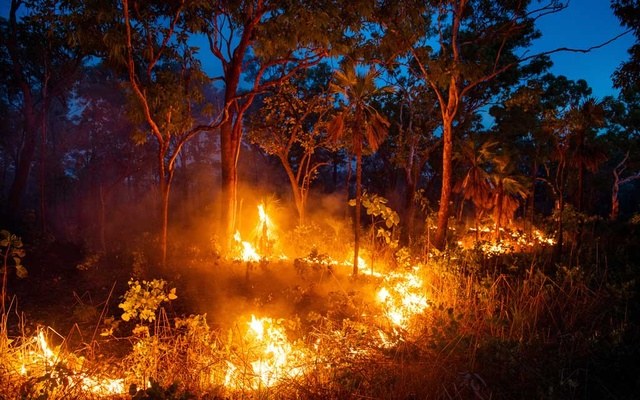 Fires ignited by Violet Lawson, to clear away undergrowth that could fuel an uncontrolled, more destructive fire, burn near Cooinda, in Australia's Northern Territory, Jan 15, 2020. Indigenous fire-prevention techniques that have sharply cut destructive bushfires in Australia are drawing new attention. (Matthew Abbott/The New York Times)