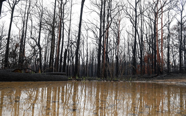 Bushland is seen burnt by fire as rain pools in large puddles at Bilpin, in the Blue Mountains, Australia, January 17, 2020. AAP Image/Dan Himbrechts/via REUTERS
