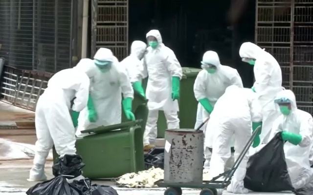 China reports H5N1 bird flu outbreak; 18,000 chickens culled