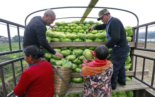 Farmers load a truck with vegetables to be sent to Wuhan, the epicentre of the novel coronavirus outbreak, at a farm in a village in Suining, Sichuan province, China February 10, 2020. Picture taken China Daily via REUTERS