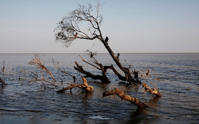 A tree is seen partially submerged in water after a riverbank collapsed in Ta Dar U village, Bago, Myanmar, Feb 5, 2020. REUTERS