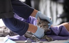 A home veterinarian examines a cat during the spread of the COVID-19 outbreak in Manhattan, New York City. REUTERS
