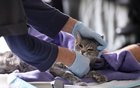 Home veterinarian Wendy Jane McCulloch examines 8-year-old cat Ivy at the closed Botanica Inc office as she makes client home visits, which have additional safety protocols in recent weeks during the spread of coronavirus disease (COVID-19) outbreak, in Manhattan, New York City, US, Mar 31, 2020. REUTERS