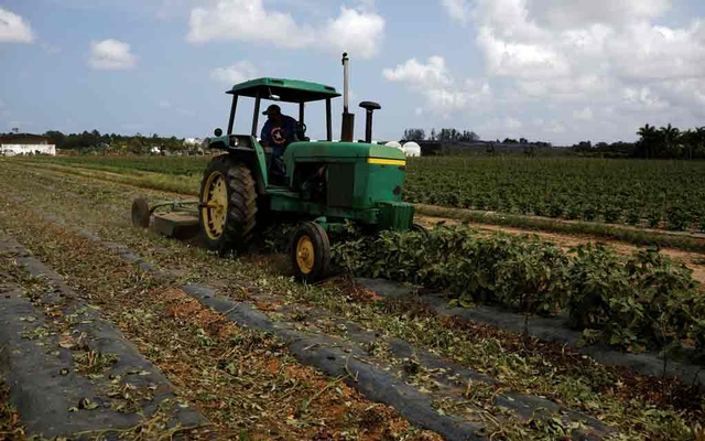A worker in a farm tractor cuts eggplant bushes due to the lack of demand in the market, as the spread of the coronavirus disease (COVID-19) continues, in Homestead, Florida, US, April 17, 2020. REUTERS