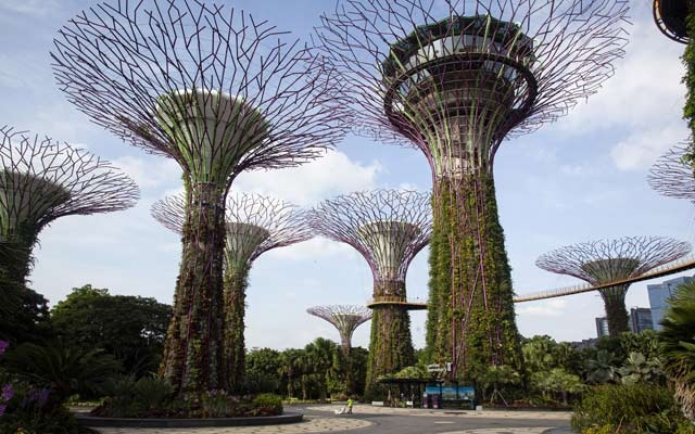 FILE -- Supertree Grove, a popular Singapore park, was almost empty March 19, 2020. Singapore's coronavirus caseload has more than doubled in the past few days, with more than 8,000 cases confirmed as of Monday, April 20, 2020, the highest in Southeast Asia. (Ore Huiying/The New York Times)